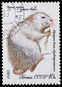 Fur-bearing Animals