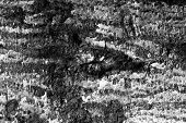 wooden texture background black and white