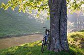 Sunny September Morning In The Park Of Nesvizh