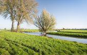Colorful Autumnal Polder Landscape In The Netherlands
