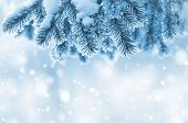 stock photo of frozen  - Winter background with Christmas tree branch frozen - JPG