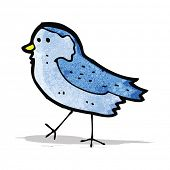 pic of bluebird  - bluebird - JPG