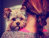 foto of toned  - a cute yorkshire terrier peeking from around a woman toned with a retro vintage instagram filter effect app or action - JPG