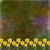 image of narcissi  - Card for invitation or congratulation with bunch of flower - JPG