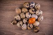 stock photo of quail egg  - Spotted Quail eggs with one orange egg on a wooden background - JPG