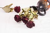 pic of keepsake  - Withered dry red rose flowers and jug - JPG