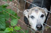 stock photo of stray dog  - Stray dog behind the corral of a dog refuge - JPG