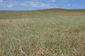 stock photo of steppes  - Blue sky over the steppes of Mongolia - JPG