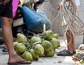 foto of climber plant  - professional climber on coconut treegathering coconuts with rope close up - JPG