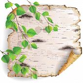 picture of wood pieces  - Twisted piece of birch bark with green branches - JPG