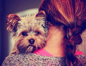 picture of shy woman  - a cute yorkshire terrier peeking from around a woman toned with a retro vintage instagram filter effect app or action - JPG
