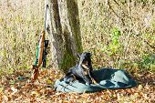 pic of hunt-shotgun  - lying hunting dog with a weapon - JPG