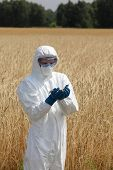 picture of biotechnology  - biotechnology  engineer on field examining ripe ears of grain - JPG
