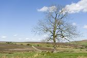 The Moors Tree