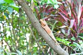 A Lizard Relaxes On A Branch