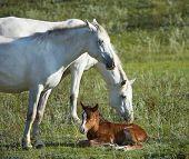 Neugeborene Fohlen und zwei Pferde