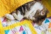 Tabby Cat Sleeping Wrapped Up In Colourful Quilt Cover poster