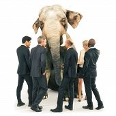 Elephant In The Room Out Of Place, Individuality Or Wisdom Concept. Business Men And Women In A Grou poster