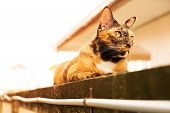 A Relax Adult Tabby Cat Laying Down On The Wall. Cat Is Cute And Friendly Pet For People. poster
