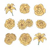 Hand Drawn Vector Set Of Yellow Rose, Lily, Peony And Chrysanthemum Flowers Contour Isolated On The  poster