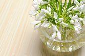 Schneeglöckchen in einer vase