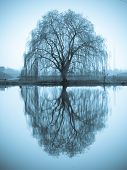 Tree and mirror on pond
