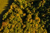 Aerial Drone View Of Autumn Forest poster