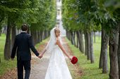 Just married couple is walking down the path in the park. The bride a wedding bouquet of red roses is turning back and smiling to the camera