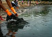 Volunteers Wear Orange Rubber Gloves To Collect Garbage On The Beach. Beach Environment Pollution. V poster