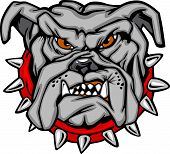 foto of growl  - Cartoon Vector Image of a Bulldog Mascot Head - JPG