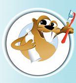 Beaver cleaning teeth