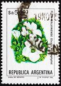 Postage stamp Argentina 1983 Scurvy-grass Sorrel, Oxalis Enneaph
