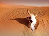 Muerte en el desierto