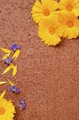 picture of borage  - Marigold and borage flowers on handmade paper - JPG