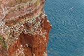 Rock At The North Sea With Many Birds Horizontal