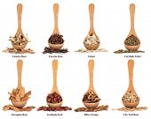 stock photo of gardenia  - Chinese herbal medicine ingredients in olive wood spoons over white background with titles - JPG