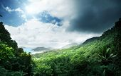 stock photo of rainforest  - jungle of seychelles island - JPG