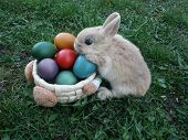 Cute Easter Bunny And Colored Eggs