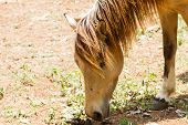 Brown Horse Feeding