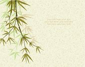 Bamboo. Floral background with copy space, vector illustration