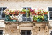 Flowers On Kotor Balcony
