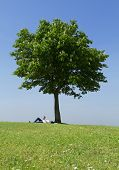 Woman Relaxing under a Tree