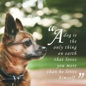 foto of mutts  - a handsome chihuahua mix senior dog with dark muted tones and a quote - JPG