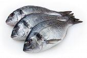 frischer Fisch isoliert Dorado auf weißem Hintergrund mit Beschneidungspfad