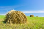 Hay bale on a field