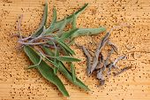 Closeup photo of Fresh and Dried Sage leaves on a wooden background