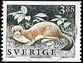 Stoat Stamp