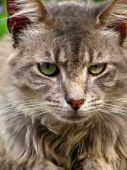 gray cat stare