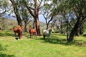 Wild Horses In Meadow