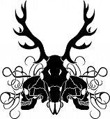 Deer skull and human skull
